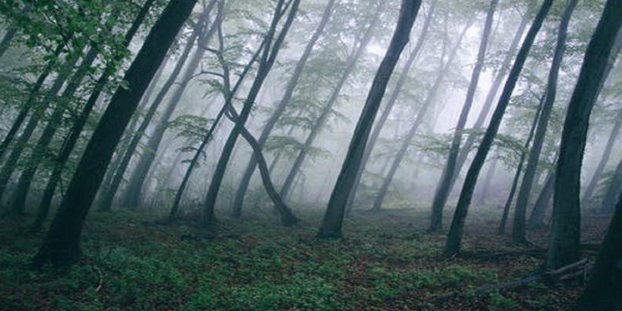 https://www.sorridibene.it/wp-content/uploads/2020/11/forest-trees-northwestisbest-exploress-1280x640.jpg