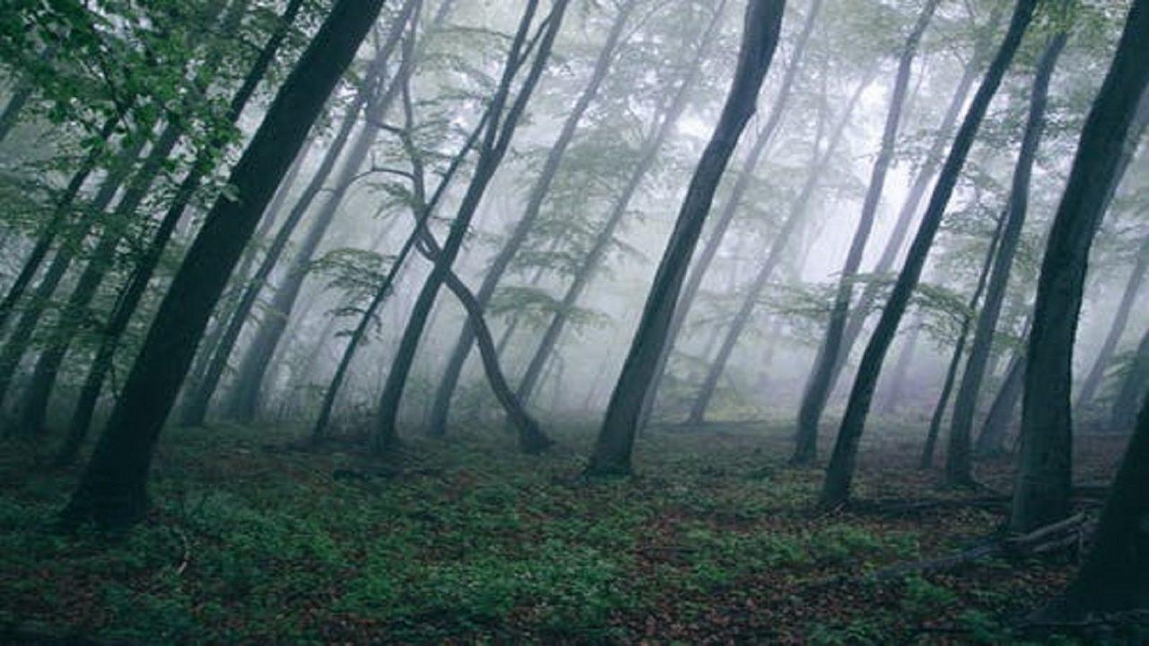 https://www.sorridibene.it/wp-content/uploads/2020/11/forest-trees-northwestisbest-exploress-1280x720.jpg